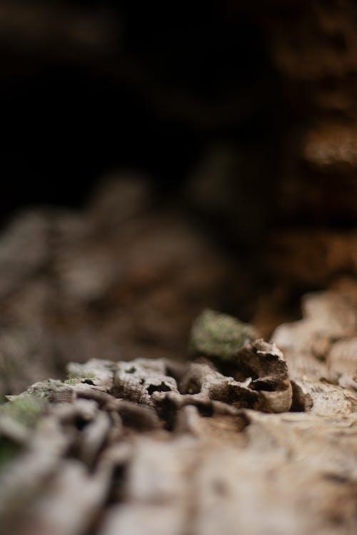 Free stock photo of 50mm, brown, nikon
