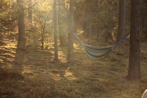 Free stock photo of camping, hammock