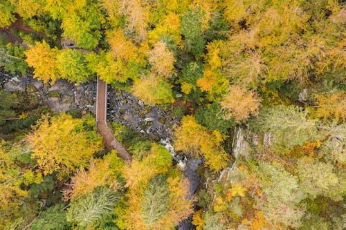 Gratis stockfoto met antenne, bergen, blad