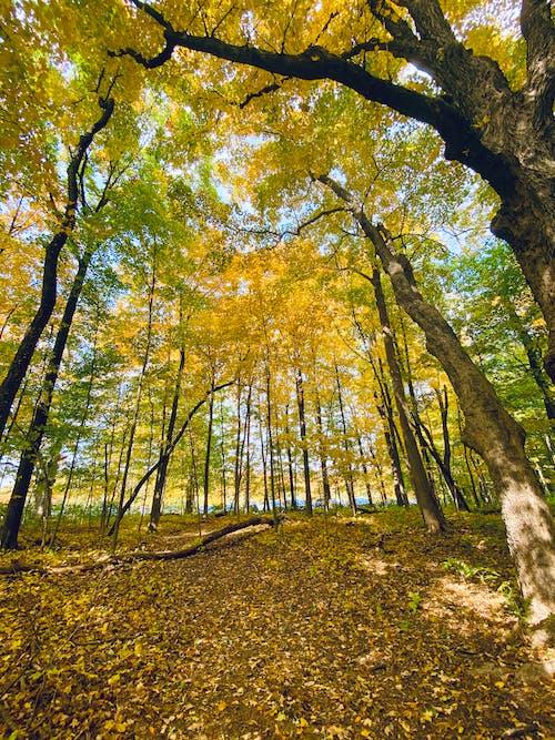 Foto profissional grátis de árvores, declínio, outono