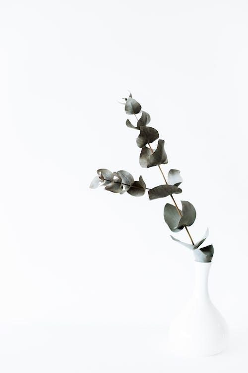 Green tender eucalyptus branch in white vase
