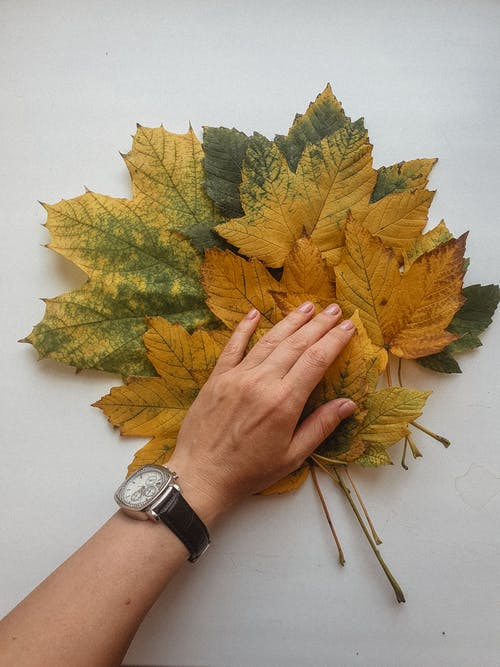Top view of anonymous person holding bunch of collected dried autumn leaves on white surface