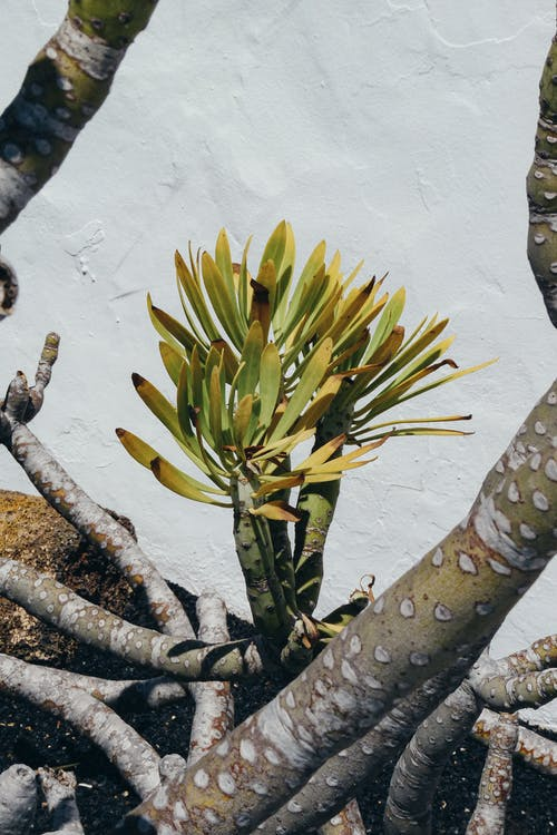 Photos gratuites de à base de plantes, arbre, bio