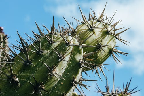 Low angle of fresh prickly cactus with sharp needles under clear blue sky