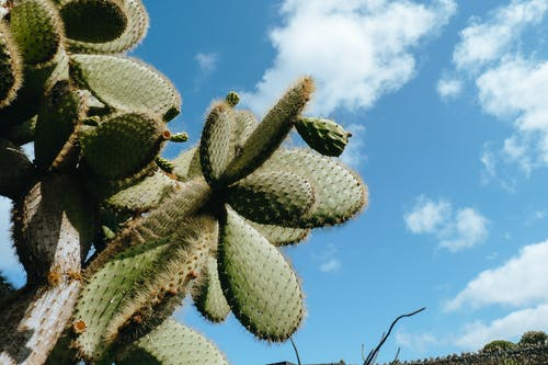 Cactus with spikes in dry desert
