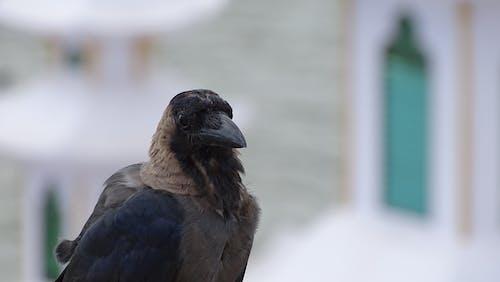 Macro Focus Photo of a Brown Bird