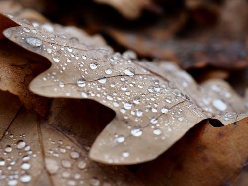Immagine gratuita di albero, arte, astratto, autunno