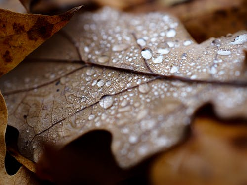 Immagine gratuita di albero, autunno, cadere, colore