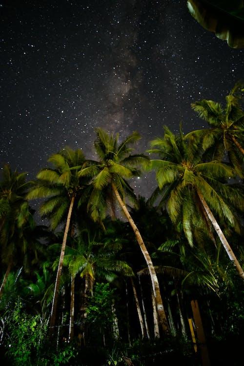 Immagine gratuita di alberi di cocco, ambiente, cielo stellato