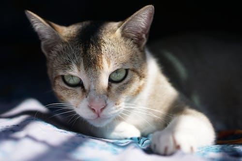 Immagine gratuita di adorabile, animale, animale domestico