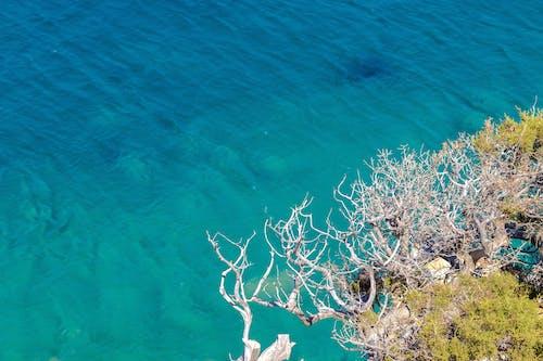 Gratis lagerfoto af amazin, farve, foto, gratis baggrund