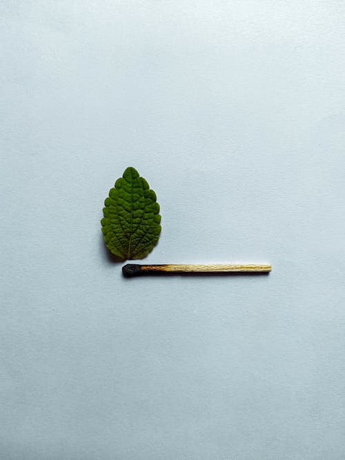 Green leaf and burnt match on white background