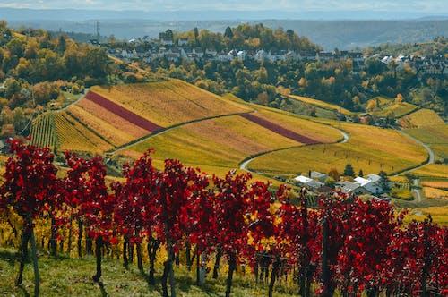 Vignoble Dans Une Vallée Pittoresque Avec Ville