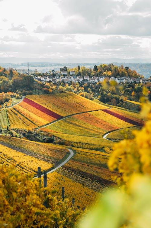 Δωρεάν στοκ φωτογραφιών με γεωργικό τομέα, γραφική θέα, γραφικός