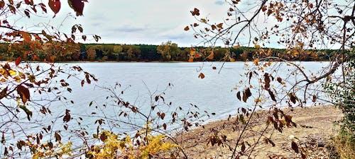Free stock photo of autumn forest, autumn lake, fall