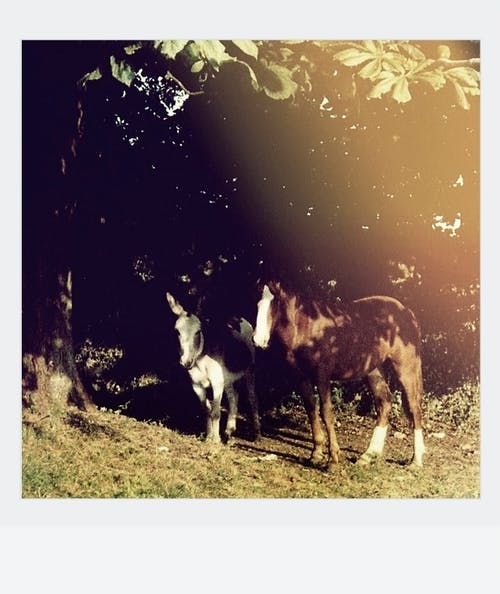 A Donkey And Horse on Green Grass Under A Tree