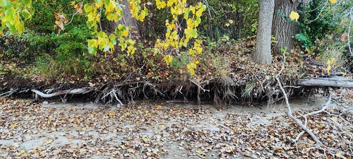 Free stock photo of autumn forest, autumn lake, decaying