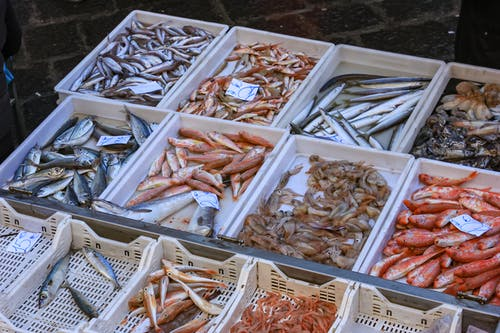 Fishes in White Plastic Container