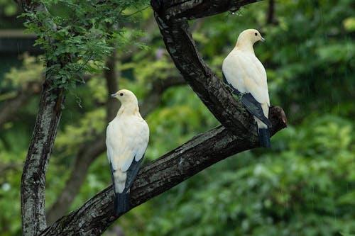 Free stock photo of bird, bird chirping, bird feather