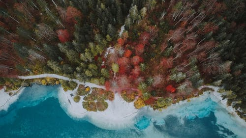 Drone view of various woods growing in forest near calm blue water of ocean
