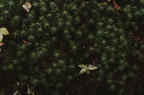 From above of lush exotic plant growing in forest and fallen leaves in autumn