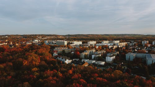 Picturesque scenery of autumn forest near apartment houses in city under overcast sky