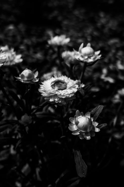 A Grayscale Photo of Flowers