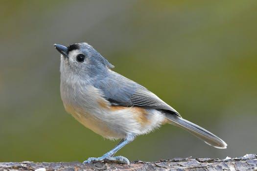 nature bird animal grey