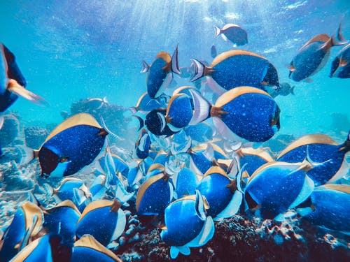 School of Blue and Black Fish