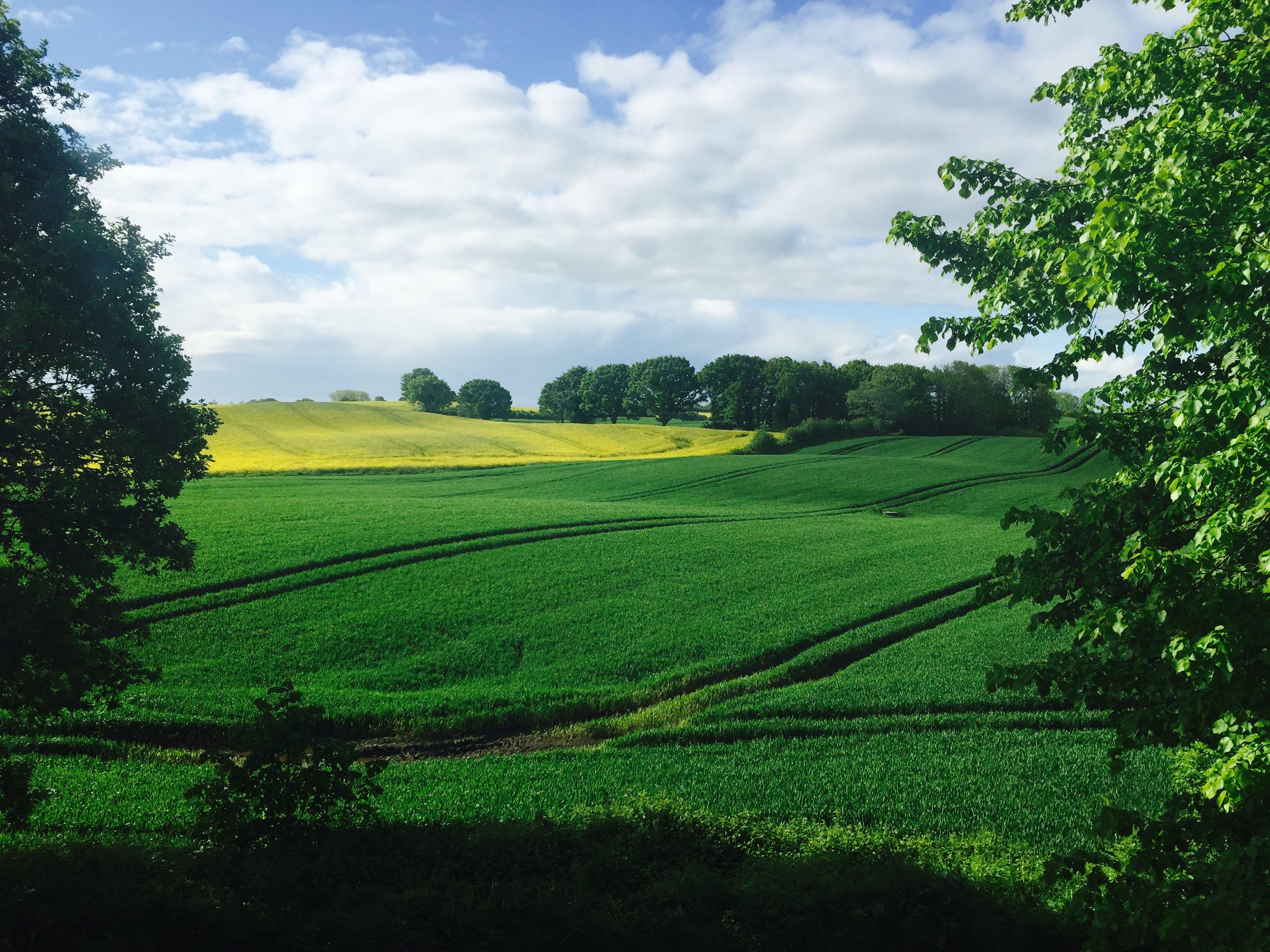 Imagine de stoc gratuită din activități agricole, arbori, câmp, cer