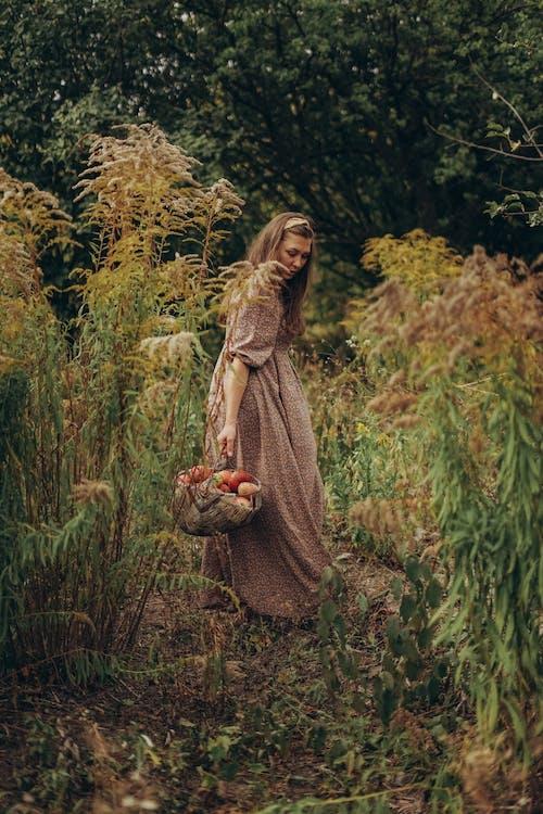 Full body female in long dress carrying wicker basket of apples standing in lush greenery
