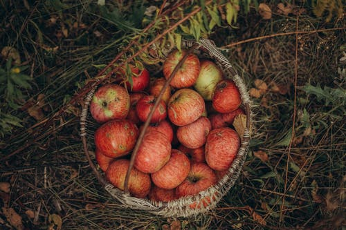 Basket with apples in meadow