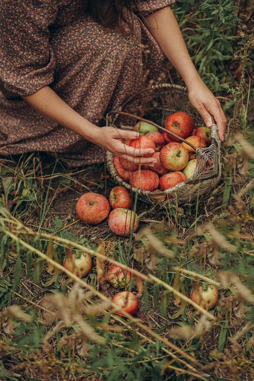 Faceless woman with basket of spilled apples