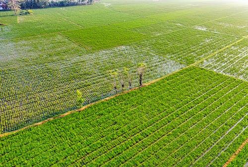 土地, 地形, 增長 的 免費圖庫相片
