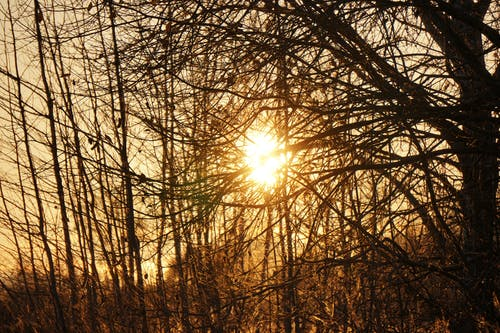 A Sun Glare Behind the Trees