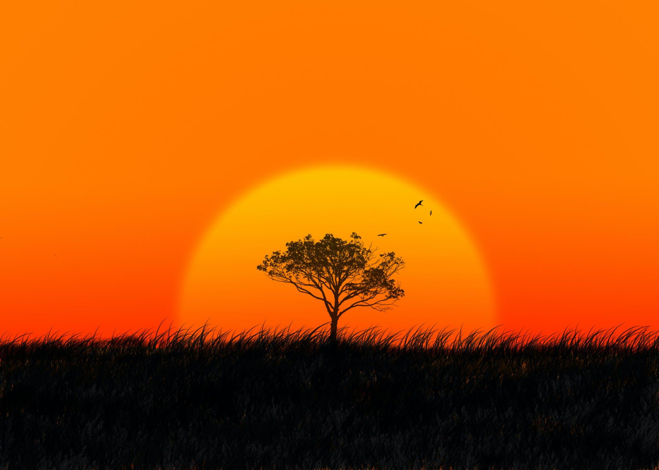 Free stock photo of africa, african, grass, orange
