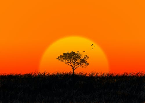 Silhouette of tree and flying birds against setting sun