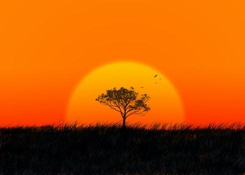 Free stock photo of sky, sunset, sunrise, grass
