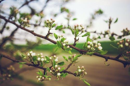 꽃, 나무의 무료 스톡 사진