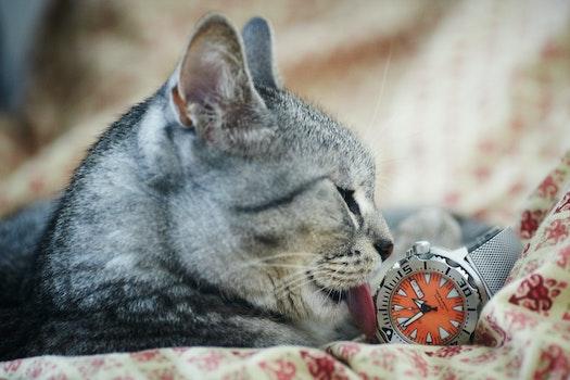 Free stock photo of wristwatch, animal, pet, cute