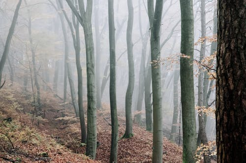 Peaceful woods with bare trees and fallen foliage on ground in dense fog