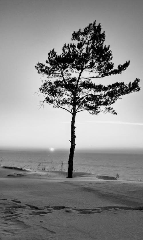 açık hava, ahşap, akşam Güneşi, bir başına içeren Ücretsiz stok fotoğraf