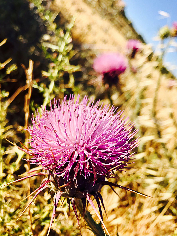 คลังภาพถ่ายฟรี ของ jerash, การถ่ายภาพธรรมชาติ, จอร์แดน, ดอกไม้