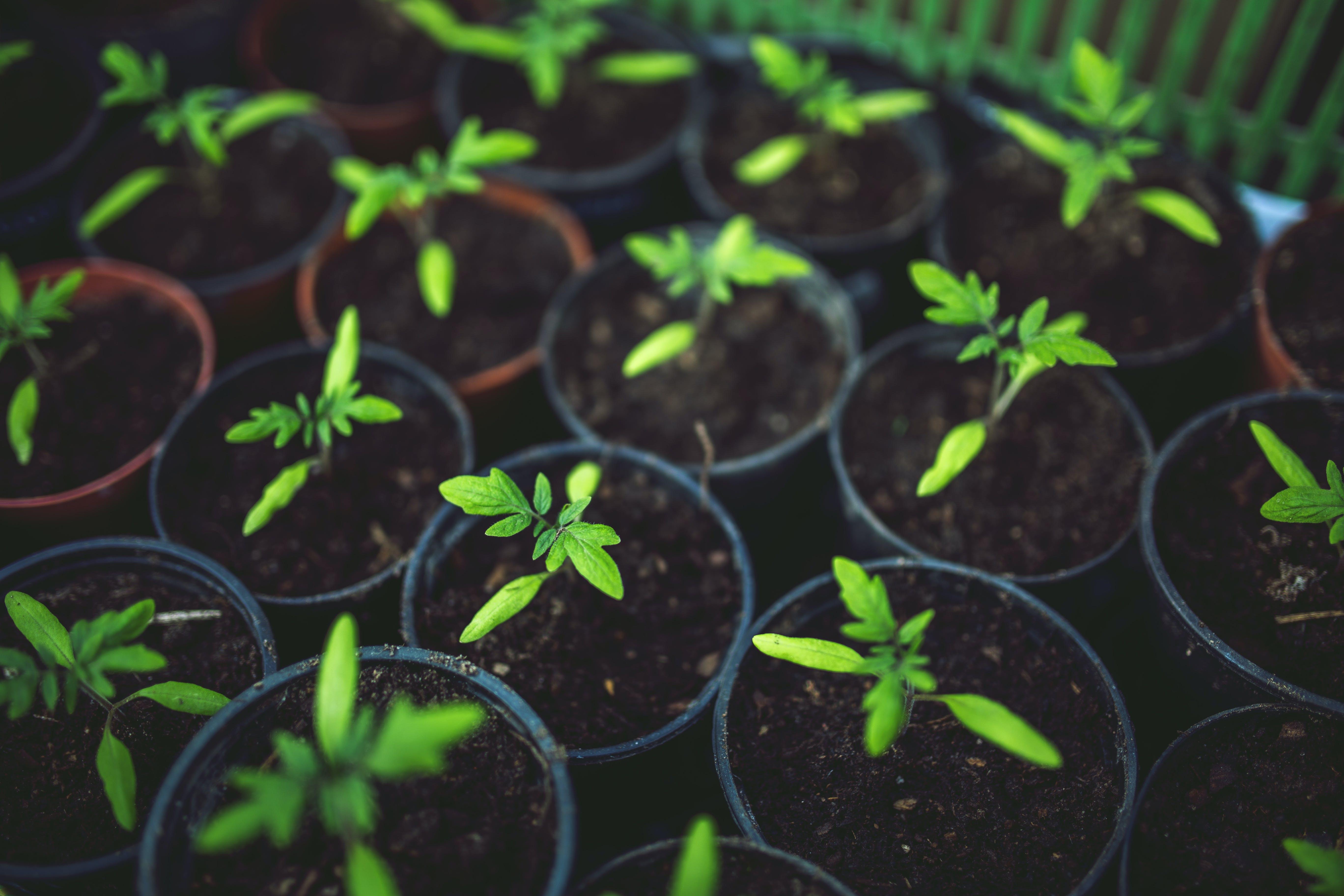 Δωρεάν στοκ φωτογραφιών με eco, ανάπτυξη, γλάστρα, έδαφος