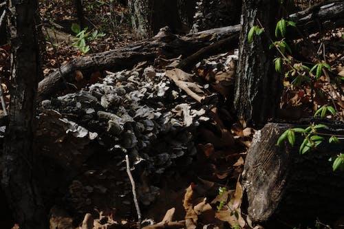 Free stock photo of dark, fallen tree, forest, fungi