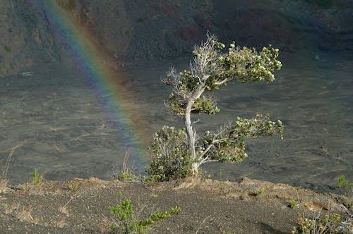 Бесплатное стоковое фото с вулкан, дерево, радуга