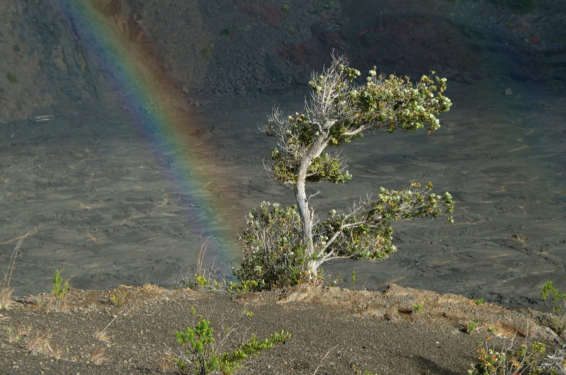 Photos gratuites de arbre, arc-en-ciel, volcan