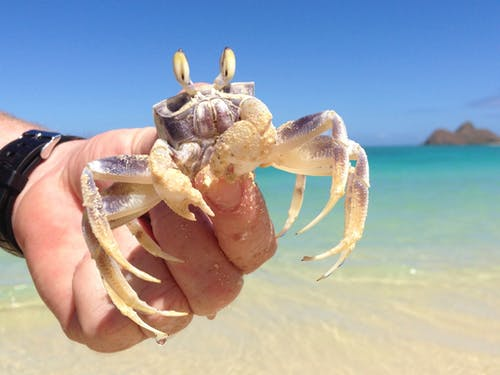 Free stock photo of beach, crab, ocean
