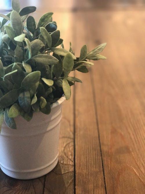 Free stock photo of plant