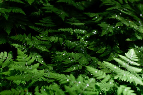 Morning dew on fern leaves in forest